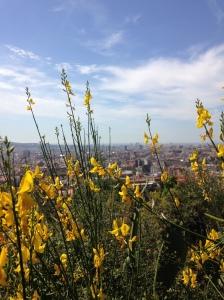 Barcelona seen through a bit of nature