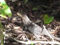 Costa Rica-Manuel Antonio-Hiking 08-09 073