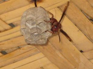 Mr. Wasp